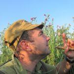 Охота на утку с манком