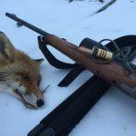 Охота с манком на лису